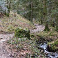 20180408 '18 Trail des Sangliers - 35km - Pierrier-44